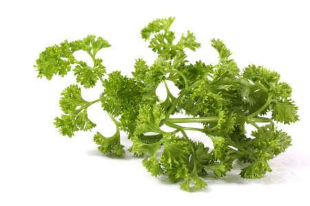 Parsley on white background Stok Fotoğraf