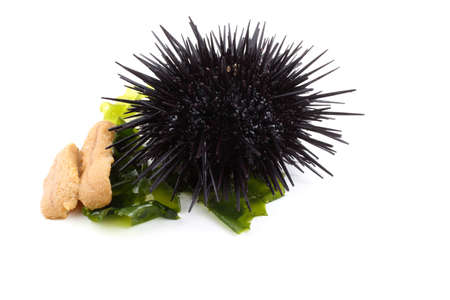 Black sea urchin and caviar
