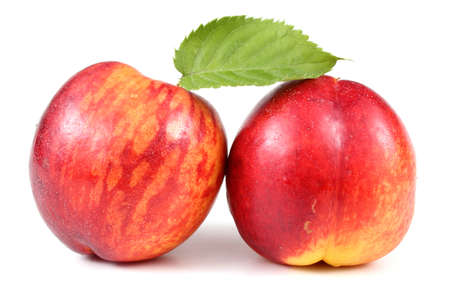 Two nectarines with leaf