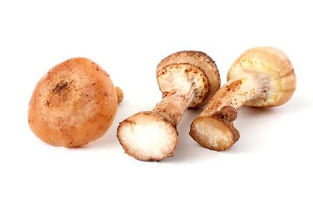 agaric: Three honey agaric mushrooms