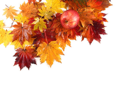 Gala apple on autumn maple leaves background Stock Photo