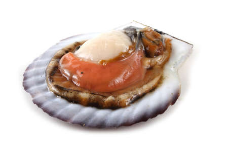 Opened scallop
