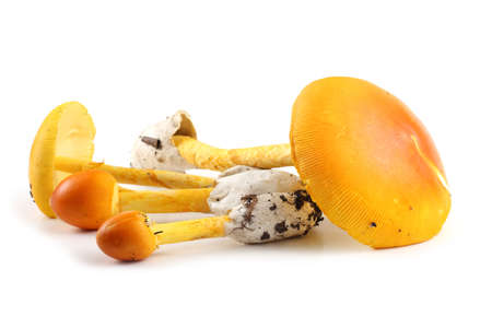 Caesars mushroom. Delicacy. Popular in Southern Europe. This mushroom was popular in The Roman Empire Stock Photo