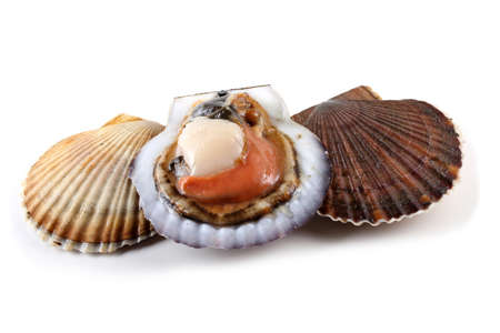 Scallops and opened scallop Stock Photo
