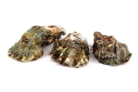 almeja: Oysters Foto de archivo