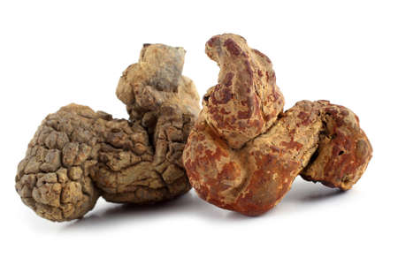 Ancient dinosaur poo fossil
