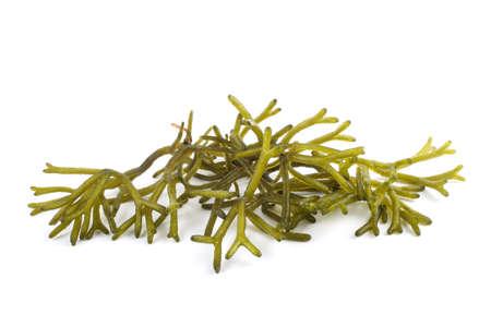 Algae isolated on white Stock Photo