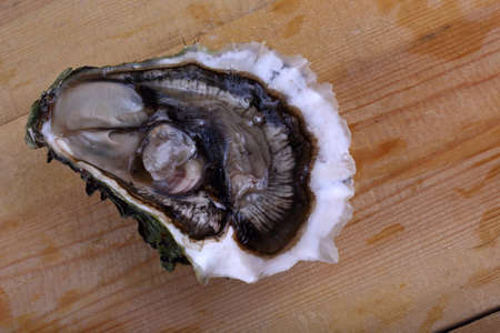Opened oyster on table