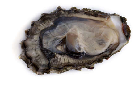 Oyster isolated on white