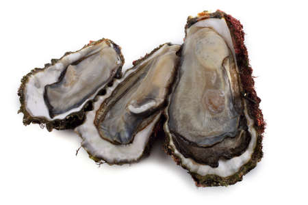Opened oysters isolated on white