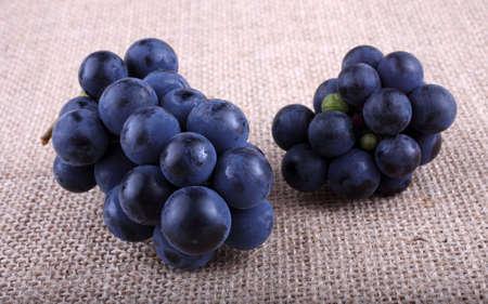 Grape on bagging. Wine grape variety