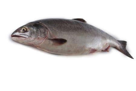 Salmone isolato su bianco