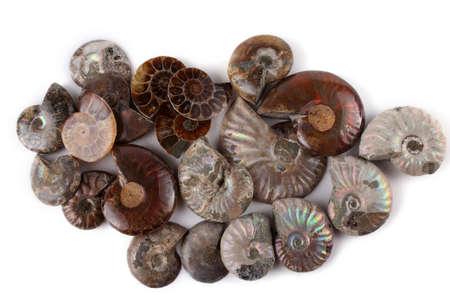 Ammonites isolated on white. Different ammonite varieties Stock Photo