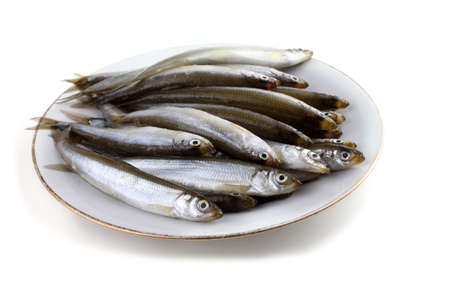 Smelt fishes isolated on white. Pacific smelt variety