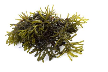 Algae isolated on white