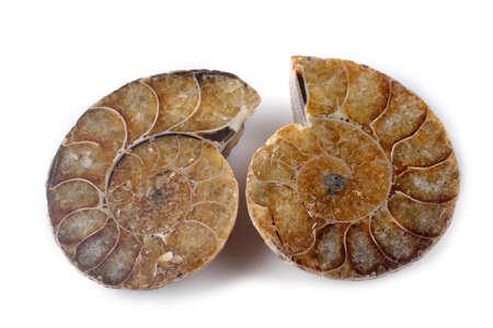 Ammonite halves isolated on white Stock Photo