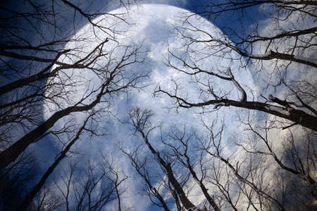 Mystic forest and huge moon Banque d'images