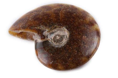 Ammonite isolated on white