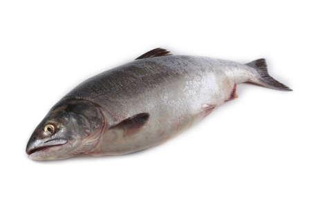 Lachs isoliert auf weiß