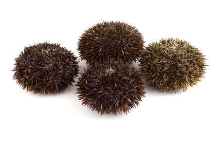 Gray sea urchins Imagens - 121647891