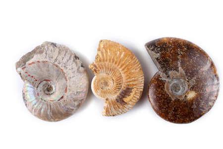 Ammonites isolated on white Stock Photo