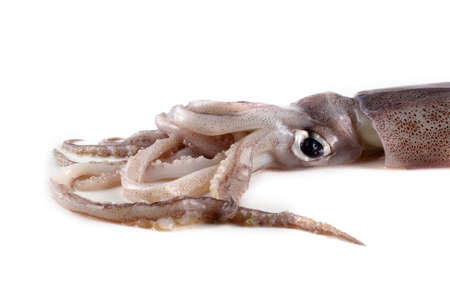 Squid isolated on white