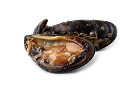 Mussel and opened mussel Stock Photo