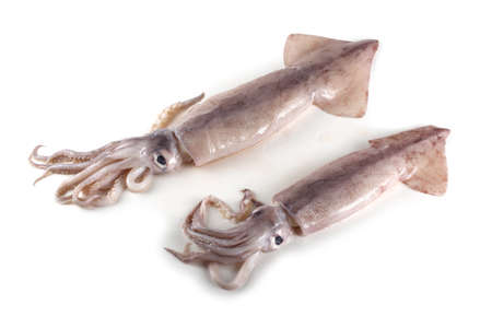 Squids isolated on white