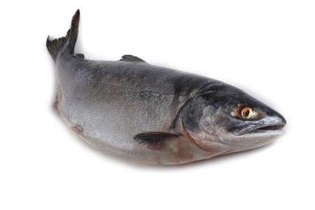 Salmon isolated on white