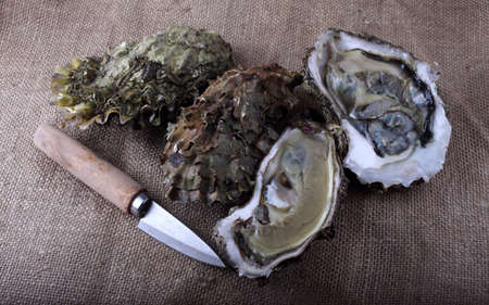 Oysters and opened oysters on bagging Stock Photo