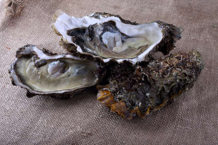 Oyster and opened oyster on bagging