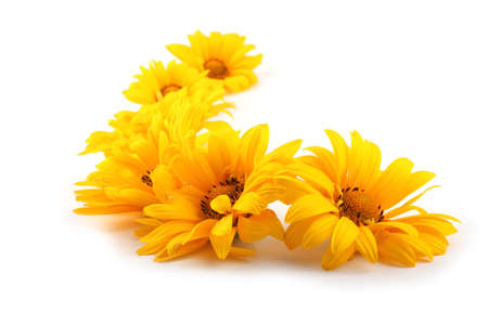 Yellow chamomiles isolated on white
