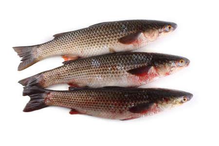 Pelengas fish (mullet variety)