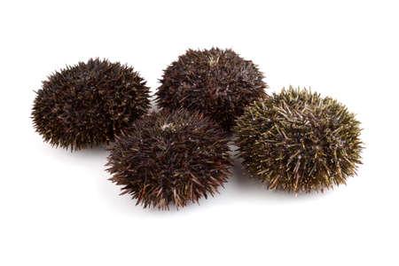 Gray urchins. Fresh sea food