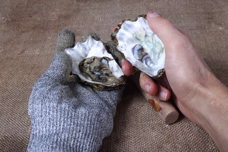 Hands opening oyster. Fresh sea food Stock Photo