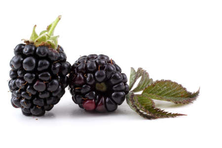Blackberries and leaf