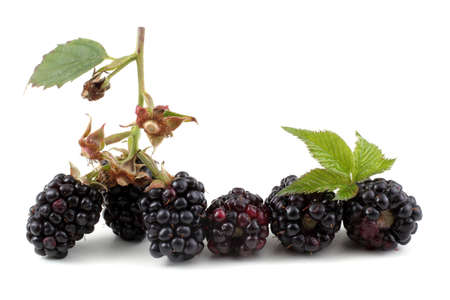 Blackberries isolated on white