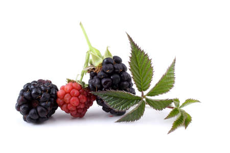 Blackberries and unripe blackberry