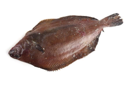 Pacific fat flounder. Delicacy Stock Photo