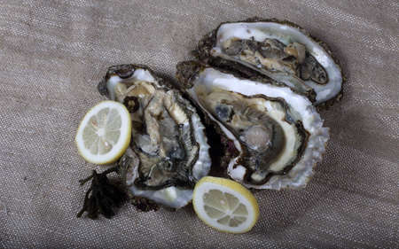Oysters on bagging