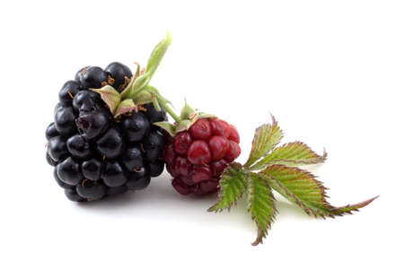 Blackberry and unripe balckberry Reklamní fotografie