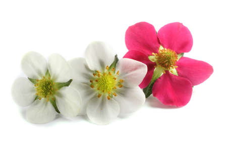 Different color strawberry flowers