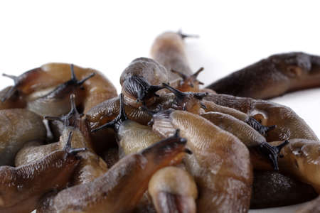 Slugs background. Macro