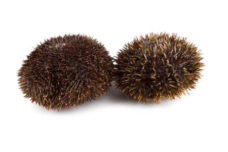 Gray sea urchins on white background