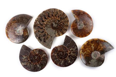 Ammonites and ammonite halves Stock Photo