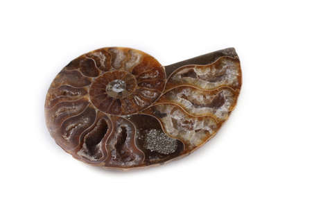 Ammonite half isolated on white Stock Photo