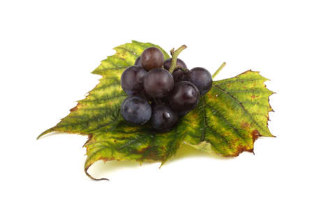 Black wine grape on autumn leaf Stok Fotoğraf