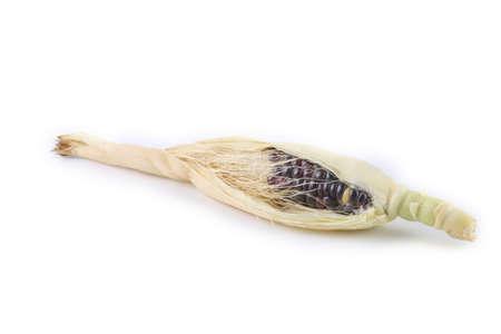 Black corn isolated on white