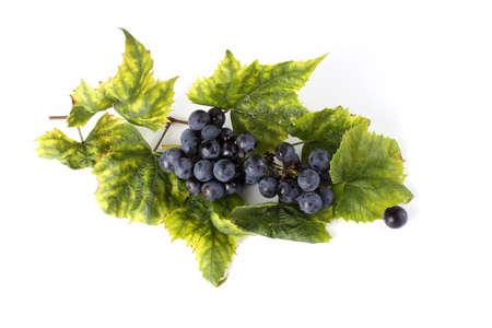 Black wine grape on autumn leaves