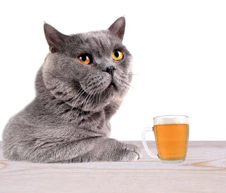 Cat drinking beer